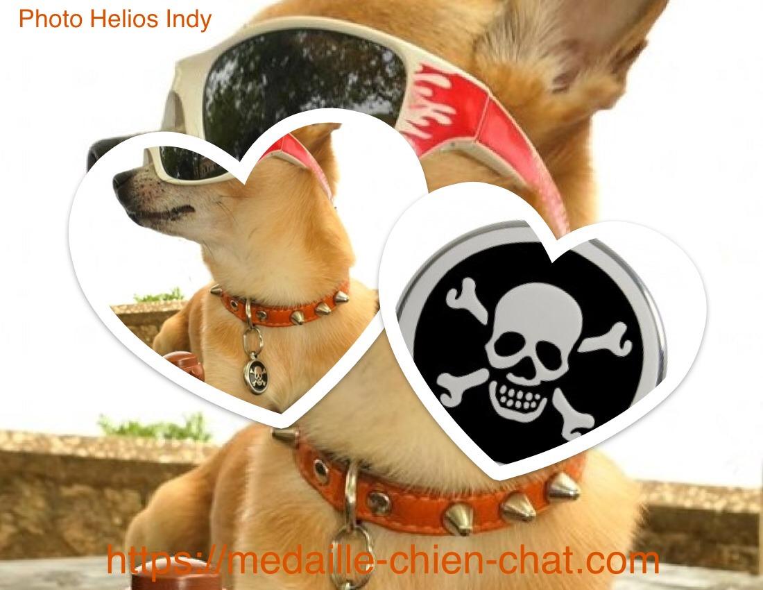 médaille gravée pirate pour chien et chat