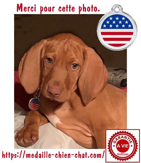 Chien avec sa médaille gravée drapeau USA en acier émaillé Red DIngo