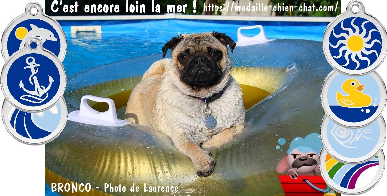 médailles gravées pour chiens et chats thème mer et nature en acier émaillé Red Dingo