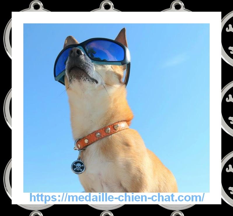 super chien avec sa médaille gravée pirate Red Dingo