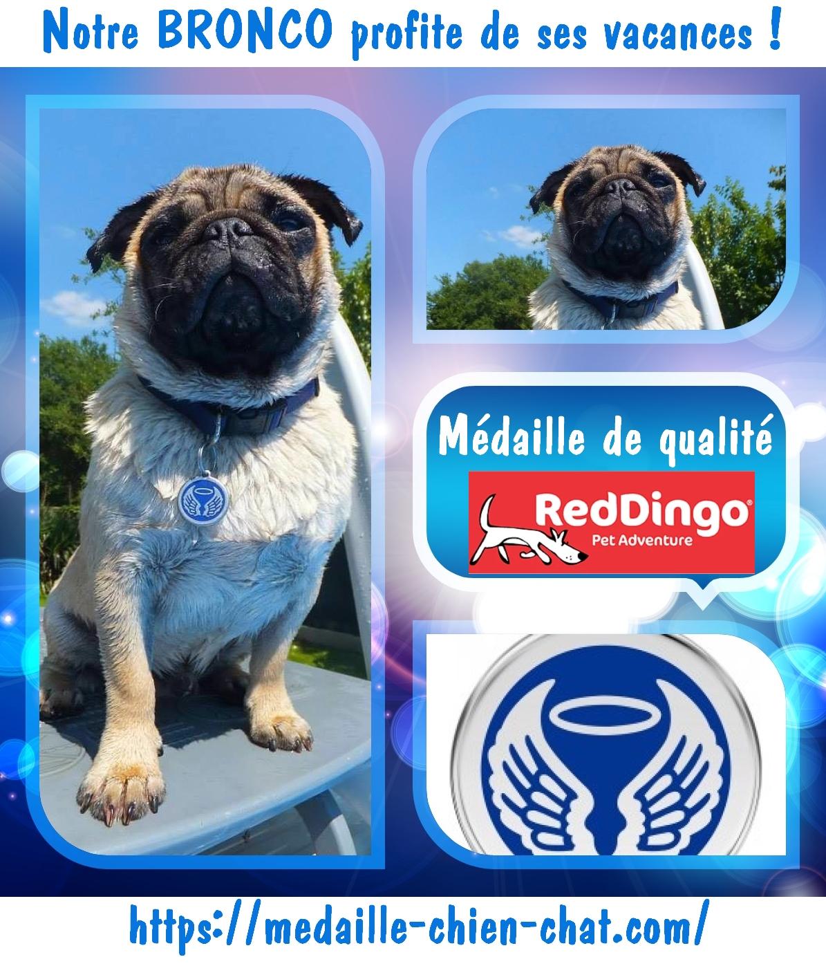 médaille gravée pour chiens et chats ailes d'ange en acier émaillé Red Dingo