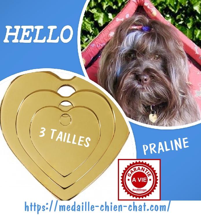 médaille gravée coeur en laiton Red Dingo pour chiens et chats