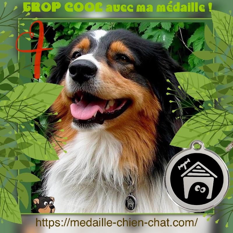 chien avec sa médaille gravée niche Red Dingo en acier émaillé
