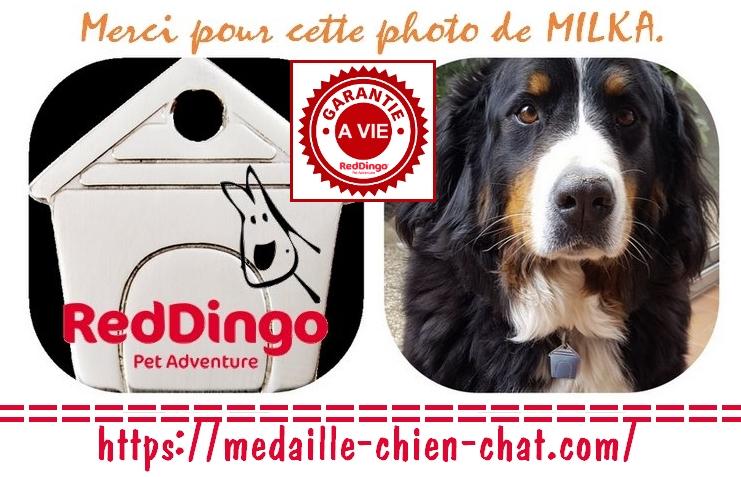 médaille gravée niche en inox ou laiton pour chiens et chats Red Dingo